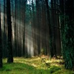 Elagage d'arbres dangereux à la clairière