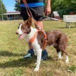 Concours Agility au club canin